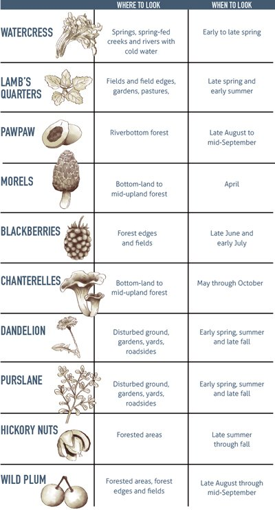 food lovers foraging guide 400px